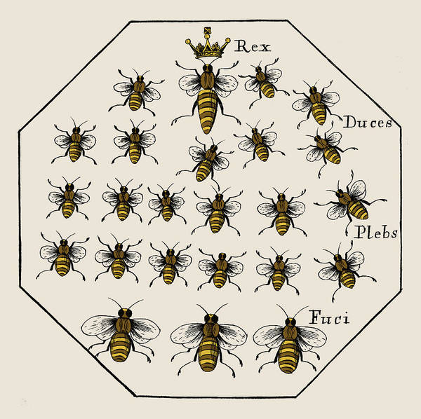 Wall Art - Photograph - Honey Bee Hierarchy, 1679 by Science Source