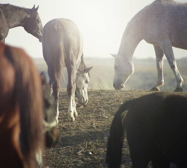 Wall Art - Photograph - Horses by Arman Zhenikeyev - Professional Photographer From Kazakhstan