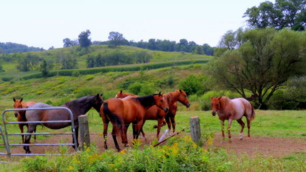Photograph - Horses In The Pasture by Kay Novy