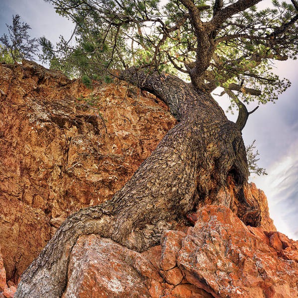 Photograph - Hugging The Cliff by Leland D Howard