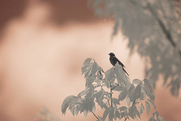 Photograph - Infrared Bird by Brian Hale
