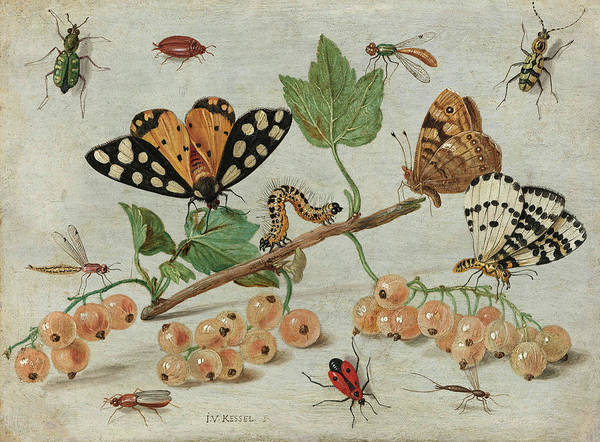 Wall Art - Painting - Insects And Fruit, 1665 by Jan van Kessel