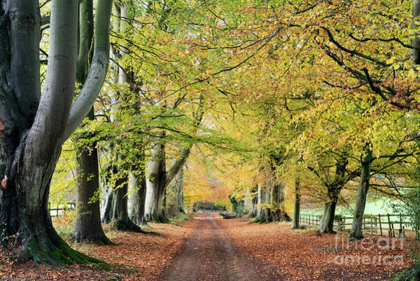 Late Autumn Wall Art - Photograph - Into The Autumn by Tim Gainey