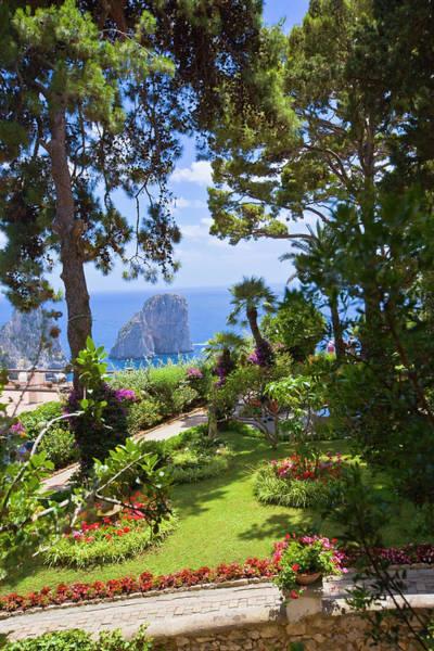 Pine Tree Photograph - Italy, Campania, Capri Island, Capri by Maremagnum
