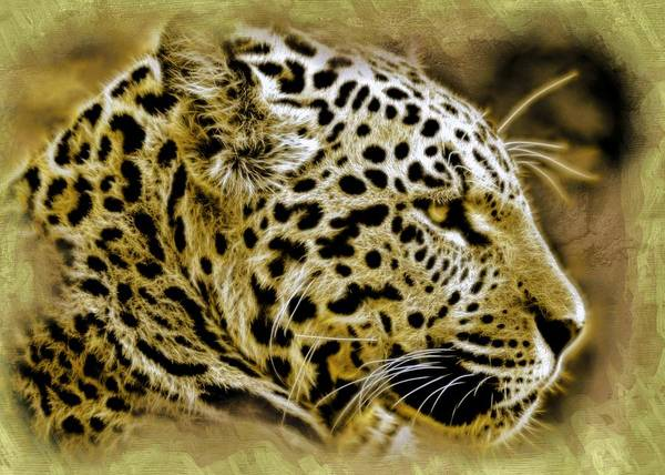 Wall Art - Painting - Jaguar by ArtMarketJapan