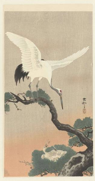 Wall Art - Painting - Japanese Crane Bird On Branch Of Pine, Ohara Koson, 1900 - 1930 B by Ohara Koson