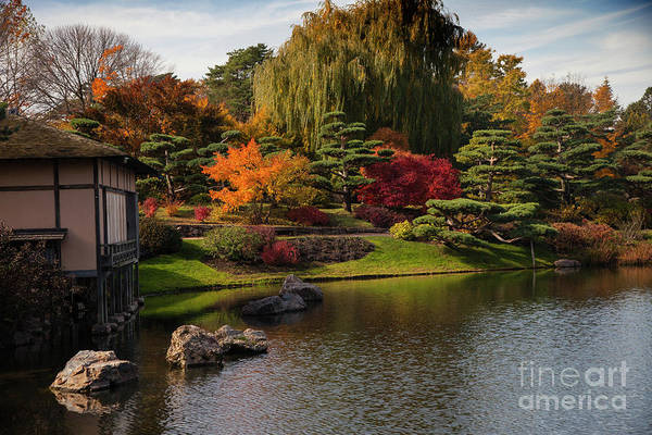 Photograph - Japanese Gardens by Timothy Johnson