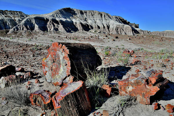 Photograph - Jasper Forest In Petrified Forest Np by Ray Mathis