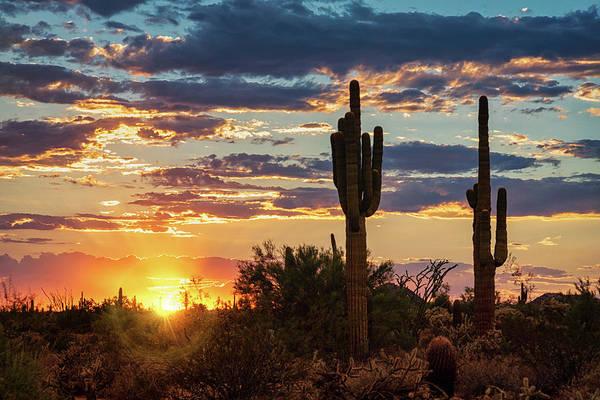 Wall Art - Photograph - Just Another Saguaro Sunset  by Saija Lehtonen