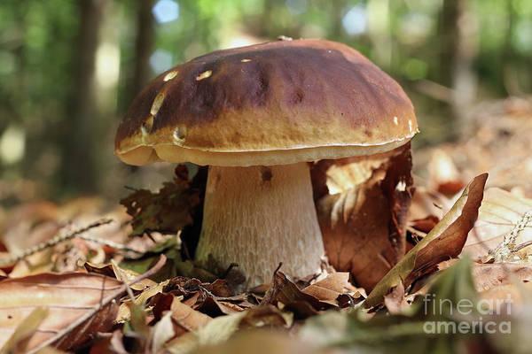 Wall Art - Photograph - King Boletus - Edible Mushroom by Michal Boubin
