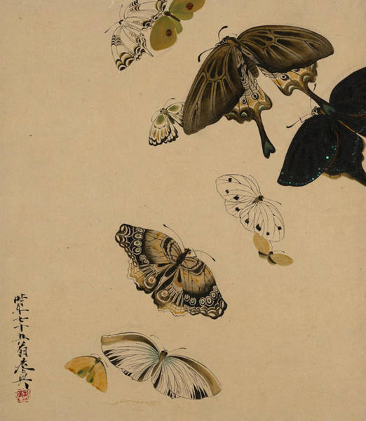 Painting - Lacquer Paintings Of Various Subjects - Butterflies by Shibata Zeshin