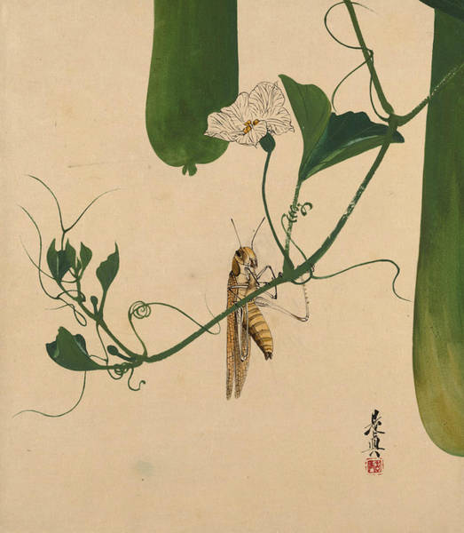 Painting - Lacquer Paintings Of Various Subjects - Grasshopper On Gourd Vine by Shibata Zeshin