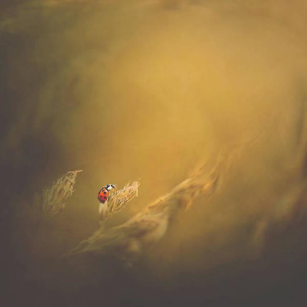 Wall Art - Photograph - Ladybird by Kristina Zvinakeviciute