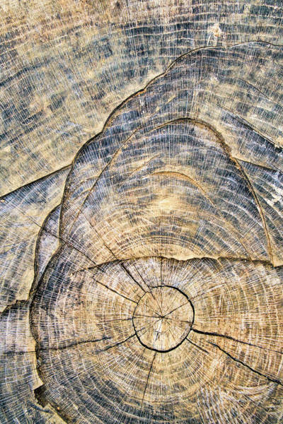 Photograph - Landscape In The Tree Stump by Gary Slawsky