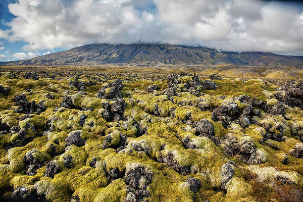 Photograph - Lava Field Of Iceland by David Letts