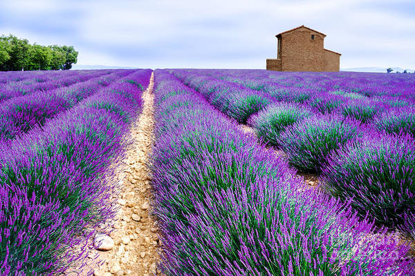Wall Art - Photograph - Lavender Field by Edler Von Rabenstein