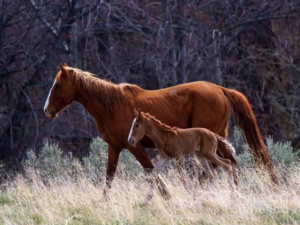 Mare Photograph - Learning To Run by Mike Dawson