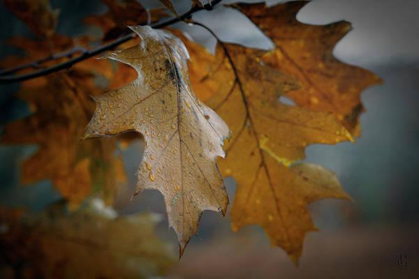 Digital Art - Leaves by Patrick Groleau