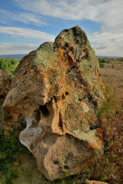 Photograph - Lichen Covered Boulder In Book Cliffs by Ray Mathis