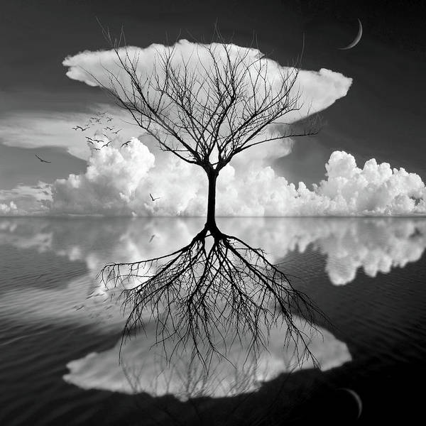 Digital Art - Lightly Touching Water by Marc Ward