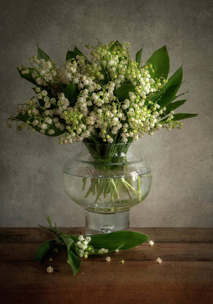 Photograph - Lily Of The Valley by Jaroslaw Blaminsky
