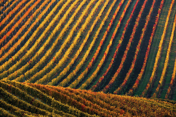 Photograph - Line And Vine by Vlad Sokolovsky