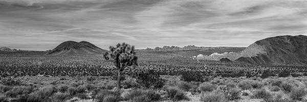 Wall Art - Photograph - Lone Joshua Tree - Pleasant Valley by Peter Tellone