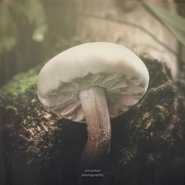 Digital Art - Look At The Mushroom by Silvia Marcoschamer