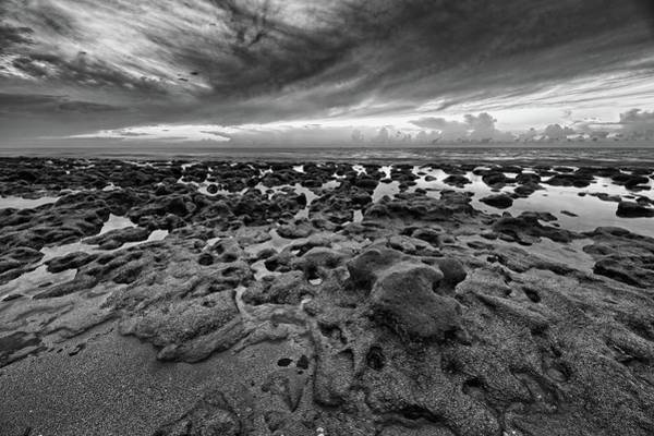 Photograph - Low Tide by Steve DaPonte