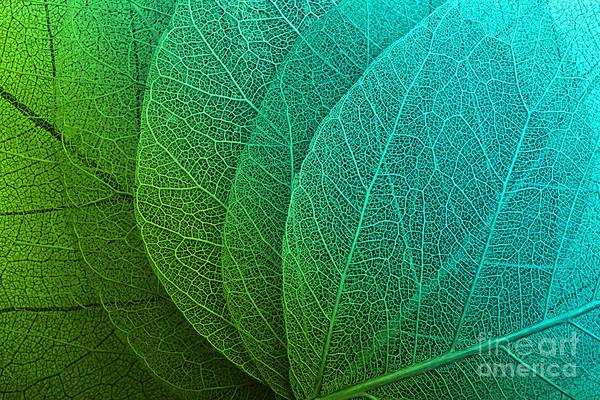 Wall Art - Photograph - Macro Leaves Background Texture by Valentina Razumova