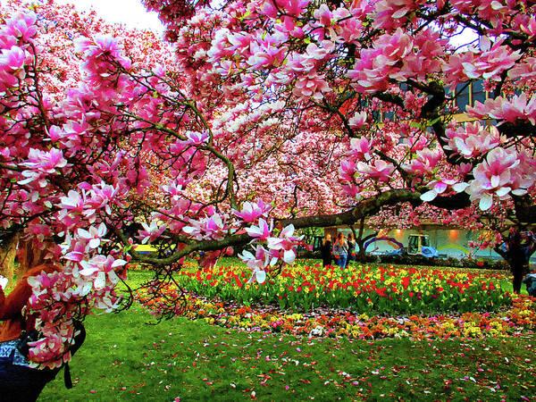 Wall Art - Photograph - Magnolia Blossoms by Alex Lim