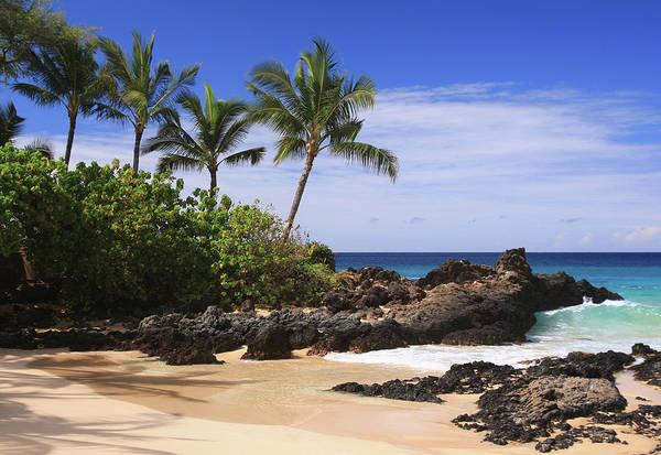 Maui Photograph - Maui Hawaii Pacific Ocean Palm Tree by Ejs9