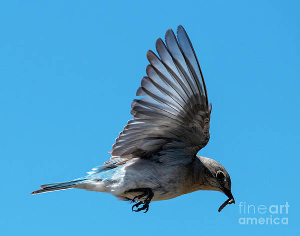 Wall Art - Photograph - Meals On Wings by Mike Dawson