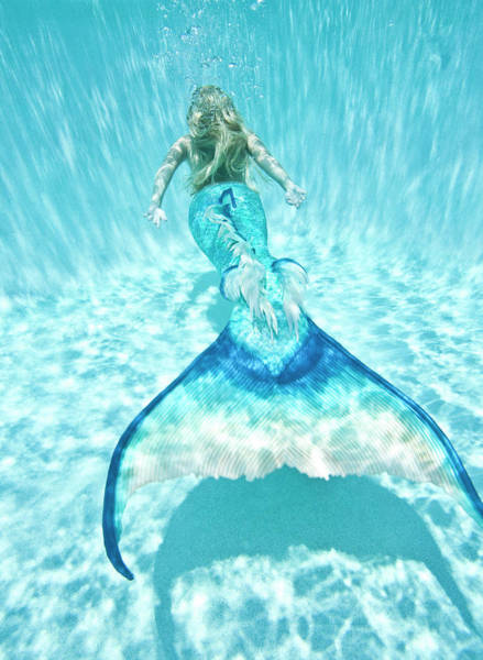 Rear View Photograph - Mermaid Underwater by Steve Williams Photo