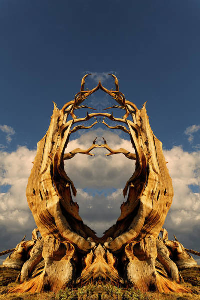 Wall Art - Photograph - Mirrored And Flipped Ancient by Adam Jones