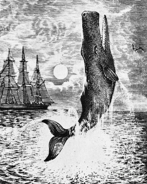 Wall Art - Drawing - Moby Dick by English School