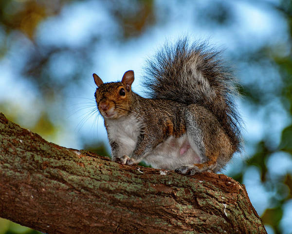 Photograph - Momma Squirrel by Cathy Kovarik