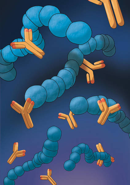 Wall Art - Photograph - Monoclonal Antibodies, Illustration by Monica Schroeder