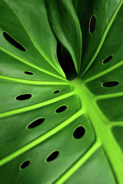 Wall Art - Photograph - Monstera Leaf by Carlos Caetano