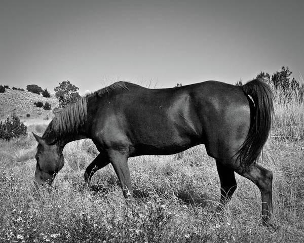 Photograph - Morgan 2 by Catherine Sobredo