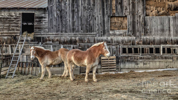 Wall Art - Photograph - Work Horses Pomfret Vermont by Edward Fielding