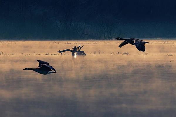 Photograph - Morning Flight by Allin Sorenson
