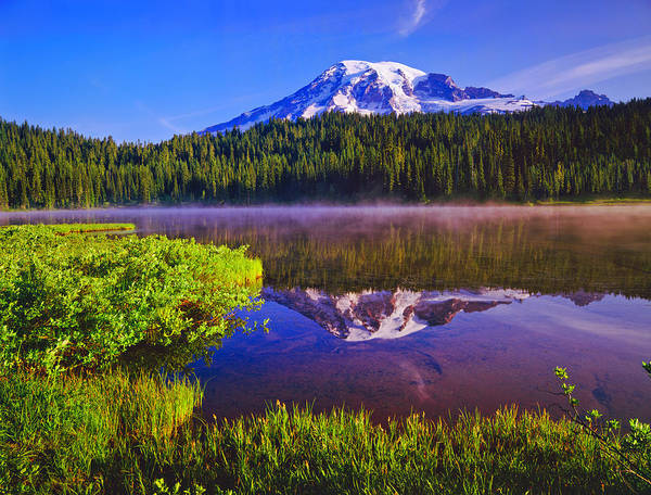 Wall Art - Photograph - Mount Rainier National Park by Ron thomas