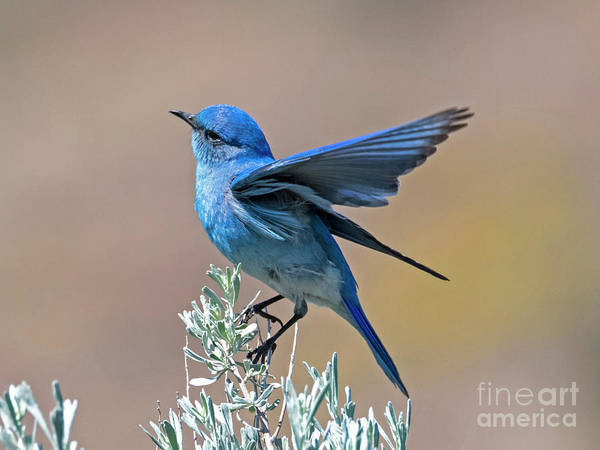 Wall Art - Photograph - Mountain Blue Landing by Mike Dawson