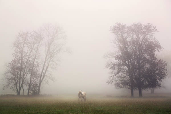 Photograph - Mystic Morning by Malcolm Macgregor