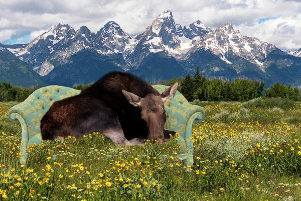 Nap Time In The Tetons Art Print