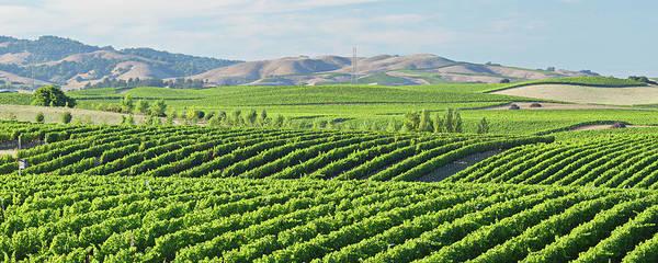 Napa Valley Photograph - Napa Valley Vineyard by S. Greg Panosian