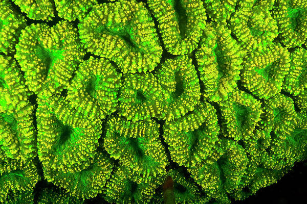 Wall Art - Photograph - Natural Occurring Green Fluorescence by Stuart Westmorland