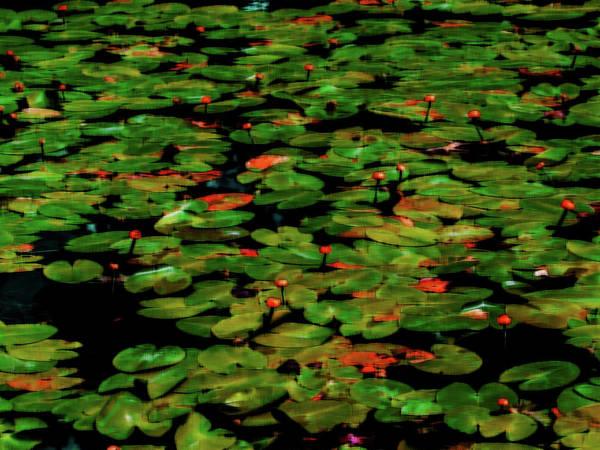 Photograph - Nature Art 6 by Jorg Becker