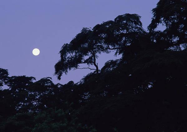 Nikko Photograph - Night Sky by Imagenavi